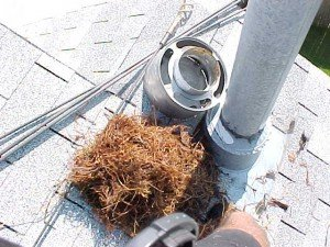 Animals Birds Nest extracted.jpg